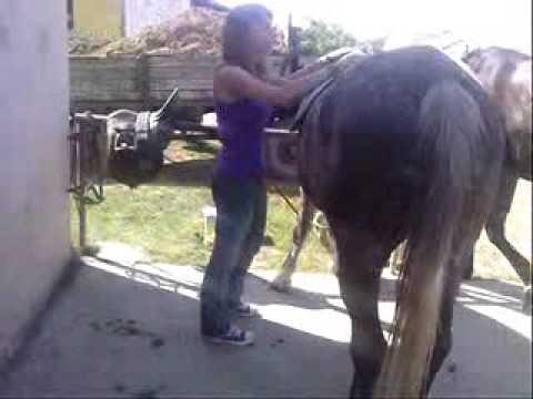 A ló felszerszámozása - oktatófilm
