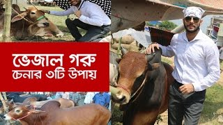 মেডিসিন বা ভেজাল গরু চিনার ৩টি সহজ উপায় By Shafin Ahmed |  Bangla Latest Report