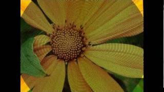 Vídeo 46 de Tony Carreira