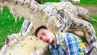 YANG BAY - Охота на крокодилов и поросячьи бега. Нячанг. Вьетнам. Часть 1