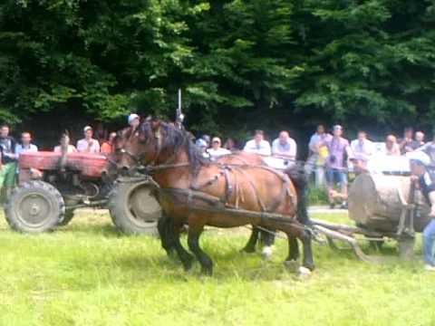 caii lui fane de la sacele-festivalul ecvestru rasnov 2011 (locul 2)