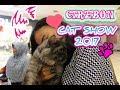 download CIREBON LOVE CAT SHOW 2017