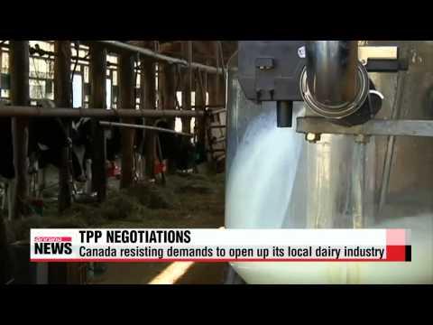 Dairy trade impasse holding up TPP deal   캐나다 TPP 최대 변수로…낙농품시장 놓고 미국과 갈등