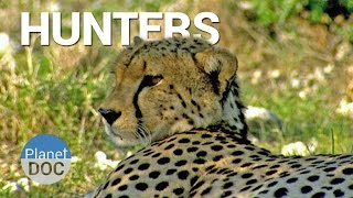 Hunters. Shaba | Nature - Planet Doc Full Documentaries
