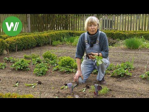 Garten Im Mai - Anbautipps Für Den Gemüsegarten