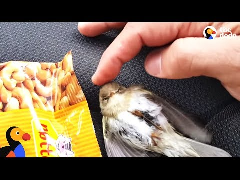 Freezing Bird Trapped on Car Roof Rescued by Perfect Guy | The Dodo