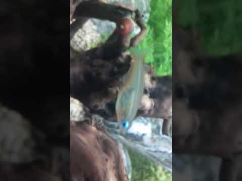 Fressnapf - Tiere entdecken