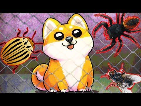 СИМУЛЯТОР ПЕСИКА развлекательное видео для детей про собачку по имени Шибо мультяшная игра от ФГТВ