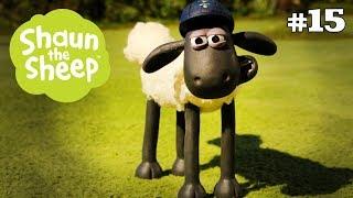 Quan Sát Động Vật - Những Chú Cừu Thông Minh [Wildlife Watch]