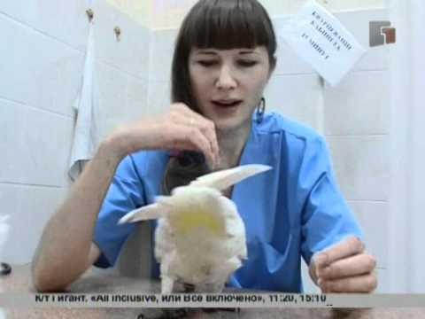 Продается клетка для волнистого попугая