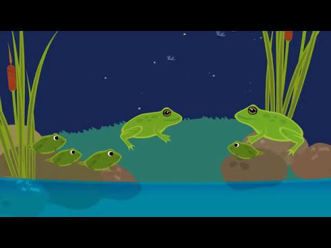 life cycle of frog (Sonar X3 Miroslav Philharmonik)