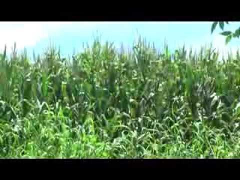Lluvias generadas por tormentas tropicales, contribuyen desarrollo del sector agrícola en la región
