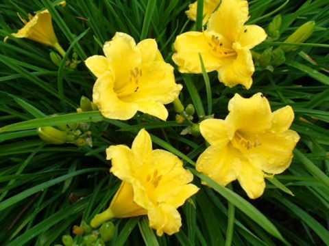 NAJPIĘKNIEJSZE KWIATY (the Most Beautiful Flowers)