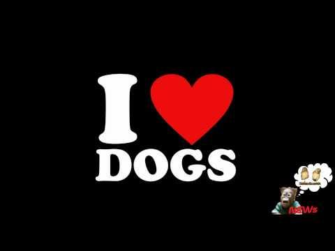 """""""i Love Dogs"""", Attrici Porno Italiane """"in Campo"""" Per Aiutare Gli Animali video"""