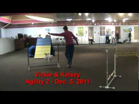 Villa La PAWS Agility Graduates: Nov & Dec 2011