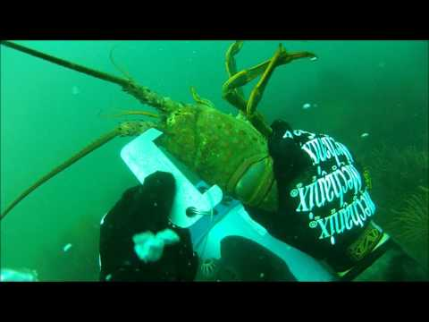 Daytime Lobster Diving, Redondo