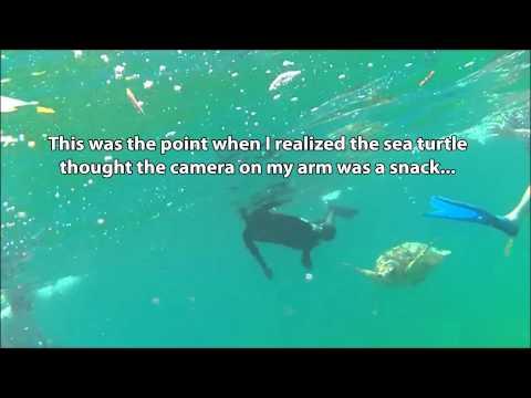 Snorkeling @ Silk Caye Part 2 - Belize