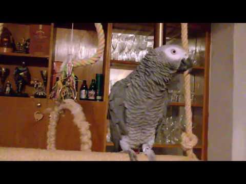 Джаро - сладкият папагал!