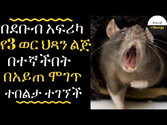 Ethiopia: Three month old baby girl is EATEN ALIVE by monster rats