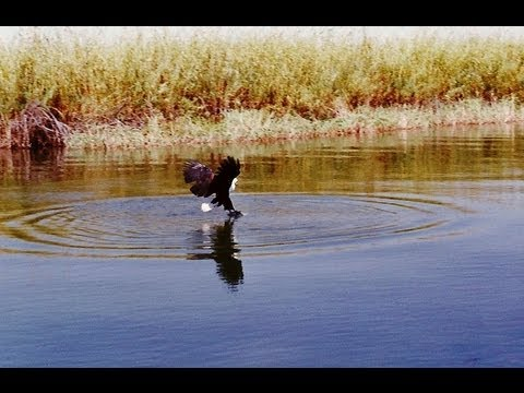 Okavango Delta boat cruise. Botswana . Travel guide.