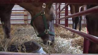 19 Neglected Horses Rescued from Baltimore Stable