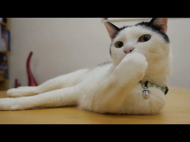 Company offers feline creature comforts