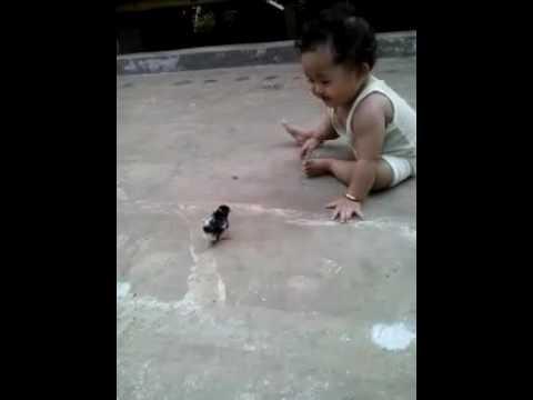 Anak kecil vs anak ayam