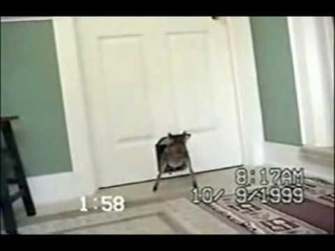 Deer comes through Cat Door.flv