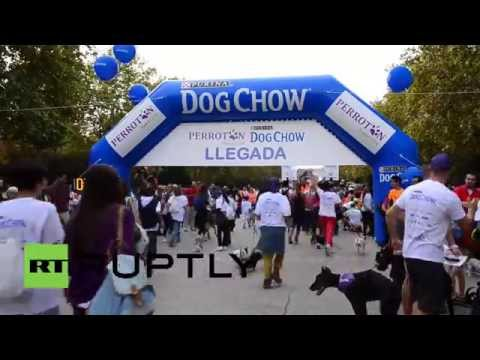 Spain: Watch this marathon where runners race with DOGS at their side