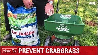 How To Make Root Beer Pulled Pork On Traeger, Big Green Egg or Weber!  - Ace Hardware