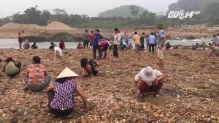 (VTC14)_Phú Thọ: Rủ nhau bỏ việc ra sông tìm đá quý