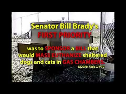Bill Brady s Dog Plan