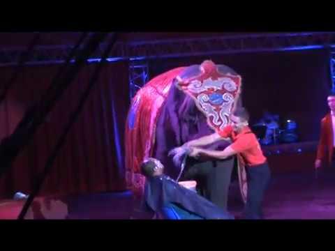 Elefánt vs. borbély