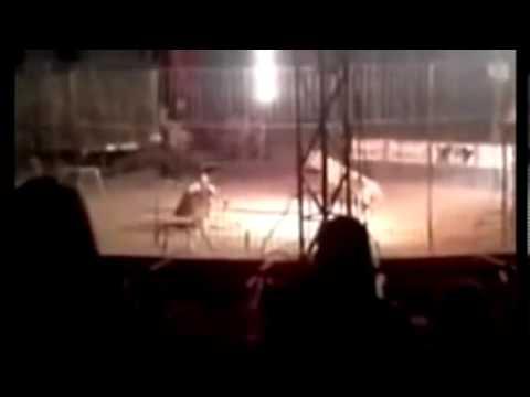 Pemain sarkas diserang harimau sehingga mati