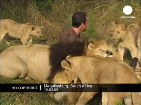 Hugs with Lions Video