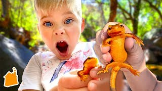 We Caught a Weird Lizard!