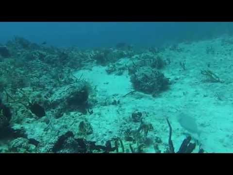 Playa Del Carmen Scuba Dive 2014