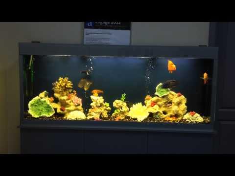 Оформление аквариумов своими руками фото