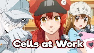 Cells at Work is THE BEST ANIME OF 2018