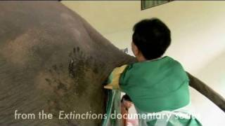 Extinctions : how to masturbate an Elephant ?