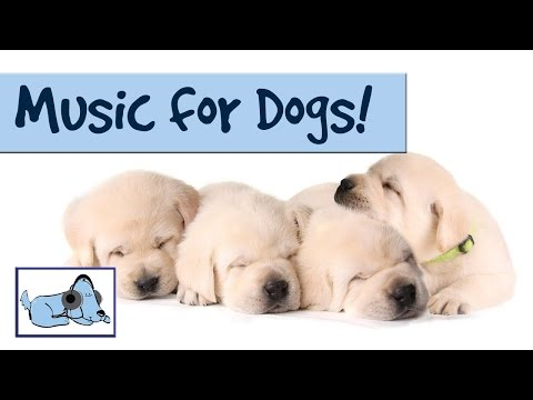 DOG MUSIC - RELAX YOUR DOG! UNIQUE SOUND TECHNOLOGY RelaxMyDog