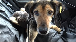 Starving Sad Dog Waiting 8 Years To Be Rescued Didn't Lose Hope That A Miracle Will Happen