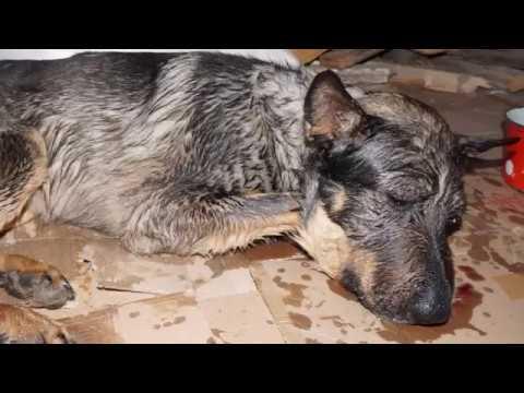 История избитой собаки со счастливым концом