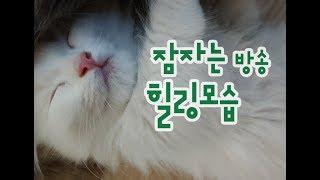 고양이 잠자는 방송모음 힐링영상 Cat Sleeping Video Collection 猫眠っている映像集