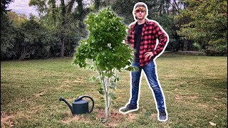 Dear Mr Beast... I want to help plant trees