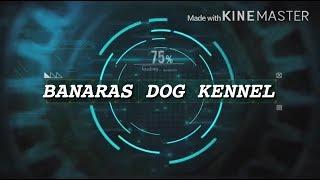 KCI DOG SHOW - ALLAHABAD DOG SHOW 2017 - DOG SHOW INDIA