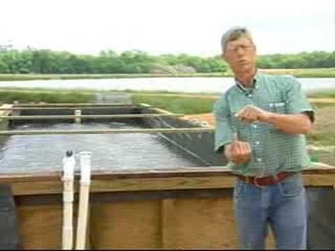 Inland Shrimp Farming In Alabama Part 3 Of 9