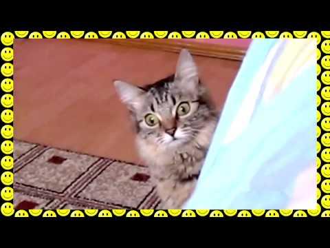 The cat is planning something evil Кот задумал что то недоброе