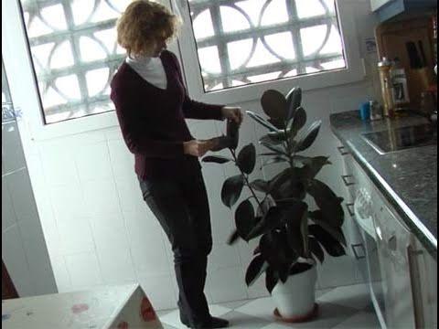 c mo ubicar las plantas seg n el feng shui youtube
