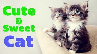 Cute & Funny cats collection #6 || Pet Stars || Cute Animals
